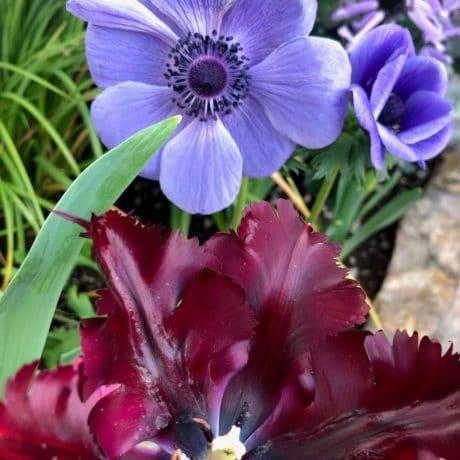 purple flower and maroon flower