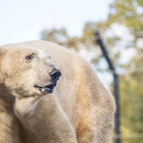 Como Zoo & Conservatory – Home – 1225 Estabrook Drive Saint