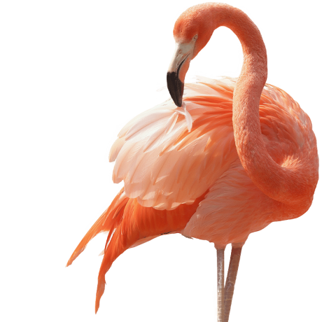 Flamingo-Cut-F.png