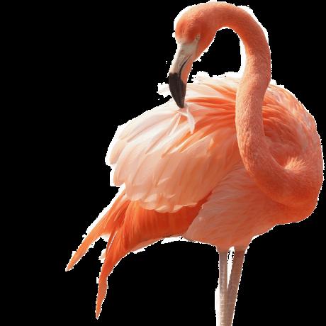 Flamingo-Cut-F.png