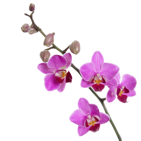 Orchid-Final-Cut.png