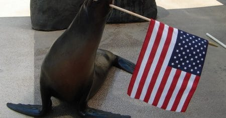 sea lion holding flag
