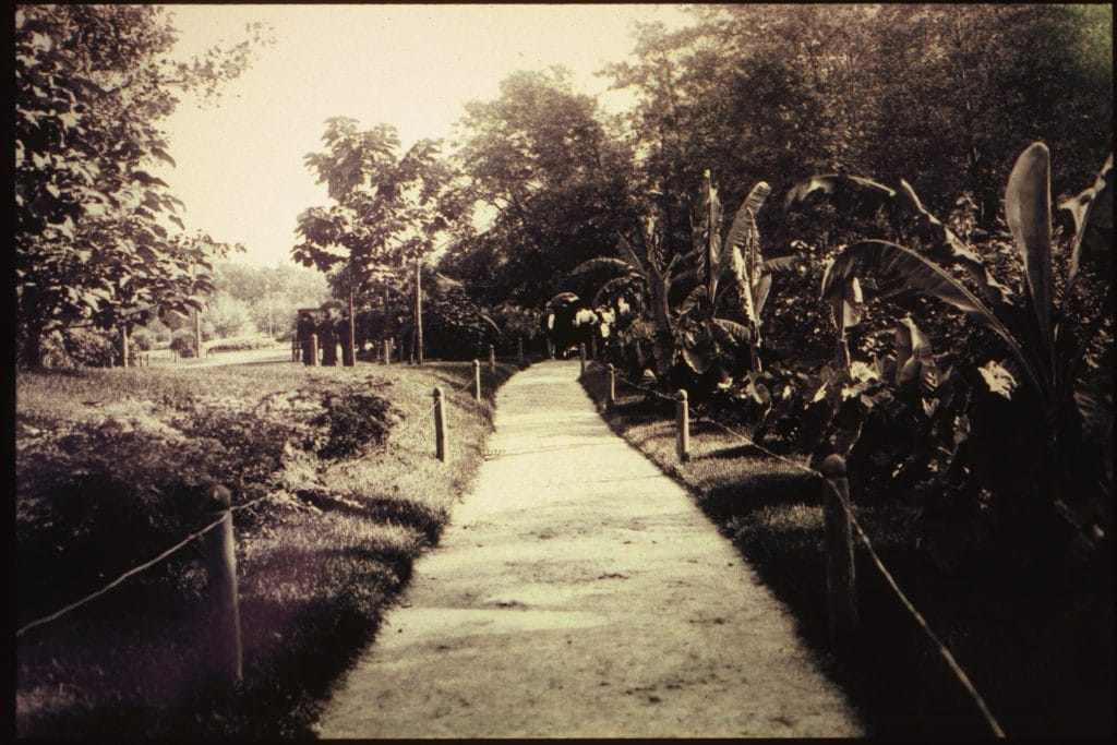 Banana Walk