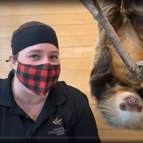 person in a mask next to sloth hanging upsidedown